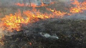 Brand rasar i långt gräs, förgrund arkivfilmer