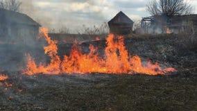Brand rasar i långt gräs, förgrund stock video