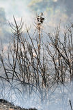 Brand van de het eiland de lage schaal van Zakynthos in volimes 03 Juli 2013, Griekenland Royalty-vrije Stock Afbeelding