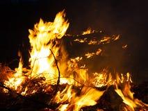 Brand wildfire, brandend pijnboombos in de rook en vlammen stock foto