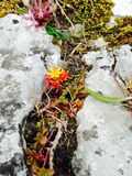 Brand zoals bloem amid rotsbarst stock afbeeldingen