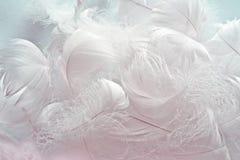 Brandamente branco para baixo Imagem de Stock