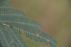 Brandamente folhas do composto imagem de stock