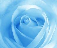 Brandamente o azul levantou-se Fotografia de Stock Royalty Free