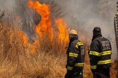 brandbestrijders Stock Fotografie