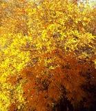 Brandbladeren Royalty-vrije Stock Foto's