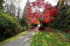 Brandboom in de herfstpark Stock Fotografie