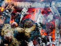 Brandceremonie met aanbiedingen van slechts plantaardige oorsprong tijdens Guru P stock fotografie