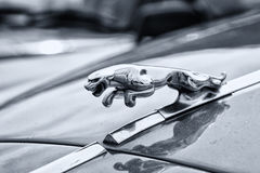 Branded emblem car Jaguar 420. BERLIN - MAY 11: Branded emblem car Jaguar 420 (black and white), 26th Oldtimer-Tage Berlin-Brandenburg, May 11, 2013 Berlin Royalty Free Stock Photos