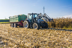 Branded tractor with a green trailer on a field of corn Stock Photo
