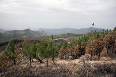 Branden in de bossen van Gran Canaria Gran Canaria royalty-vrije stock afbeelding