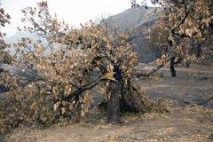 Branden in de bossen van Gran Canaria Gran Canaria royalty-vrije stock foto