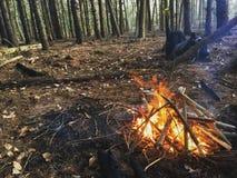 Branden in het hout Stock Foto