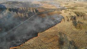 Branden op grote schaal Brandende gras en bomen op een groot gebied stock footage