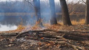 Brandend kampvuur op de kust van een de herfst bosmeer stock videobeelden