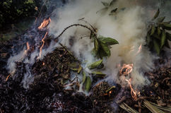 Brandende bladeren & rook 2 Royalty-vrije Stock Foto's