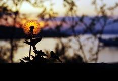 Brandende bloem Royalty-vrije Stock Afbeeldingen