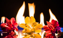 Brandende bloemen Royalty-vrije Stock Foto's