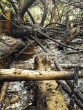 Brandende bomen in het bos Royalty-vrije Stock Foto's