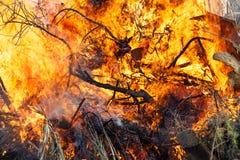 Brandende bosstruiken royalty-vrije stock fotografie