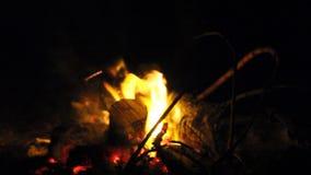 Brandende brand met brandhout stock footage