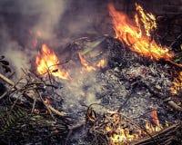 Brandende droge bladeren royalty-vrije stock foto's