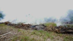 Brandende droge gras en stapels met witte rook op landbouwbedrijfgebied stock video