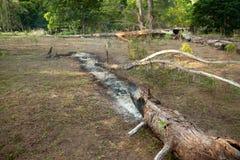 Brandende eenzame boom Stock Foto's