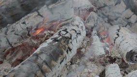 Brandende Houtskool stock videobeelden