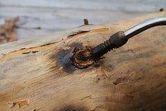 Brandende knopen op logboek Stock Foto