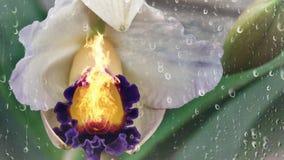 Brandende Orchidee stock illustratie