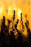 Brandende struik Stock Fotografie