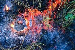 Brandende Struik Stock Afbeeldingen
