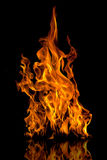 brandflammor Arkivfoto