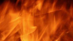 Brandflammor stock video