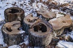 Brandhout in de boslogboeken van blokken royalty-vrije stock afbeeldingen