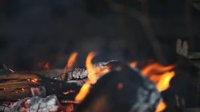Brandhout in de grill stock video