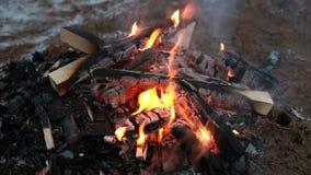 Brandhout in de koude nacht, openlucht de winterkampvuur stock video