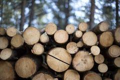 Brandhout in het bos Stock Foto's