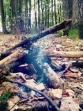 Brandhout in het bos Royalty-vrije Stock Foto's