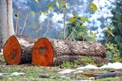 Brandhout op een berghelling stock afbeeldingen