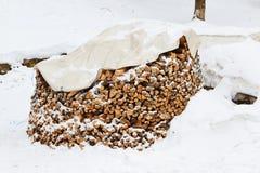 Brandhout in sneeuw Stock Foto