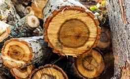 Brandhout voor de het verwarmen seizoen vaste brandstof royalty-vrije stock afbeeldingen
