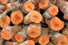 Brandhout voor patroon Stock Foto's