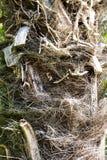 Brandhoutmaterialen stock afbeelding