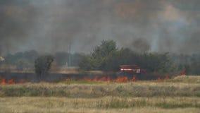 Brandmän går nära brandlastbilen på det brände fältet och ska sätta ut en brand stock video