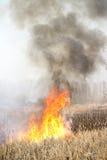 Brandmannen släcker burninggräs i Ukraina royaltyfria bilder