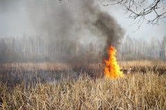 Brandmannen släcker burninggräs i Ukraina arkivbilder