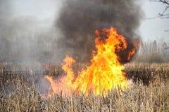 Brandmannen släcker burninggräs i Ukraina royaltyfri bild
