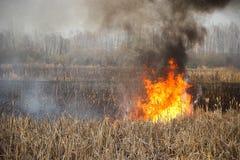 Brandmannen släcker burninggräs i Ukraina arkivfoton